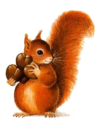 logo écureuil